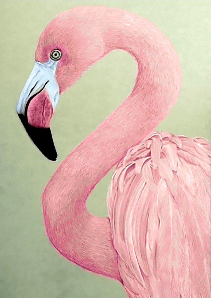 Картинки розового цвета для детей, про львов надписями